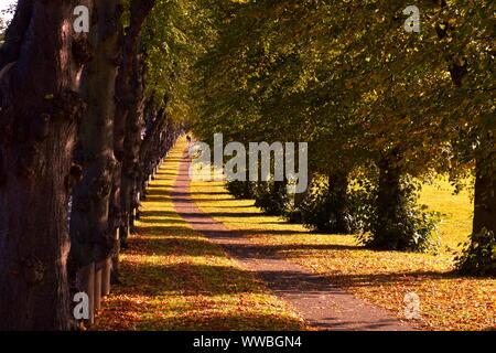 Schatten der Bäume entlang Pfad an einem kalten Herbsttag cast - Stockfoto