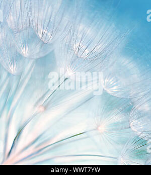 Blaue abstrakte Löwenzahn Blume Hintergrund, extreme Nahaufnahme mit soft Focus, wunderschöne Natur details
