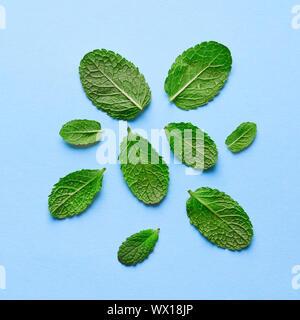 Verschiedene grüne Blütenblätter von Minze auf blauem Papier Hintergrund. Flach - Stockfoto