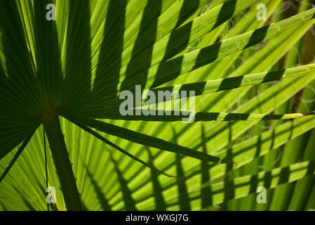Close-up Pattern aus Palmblättern in Marokko - Stockfoto