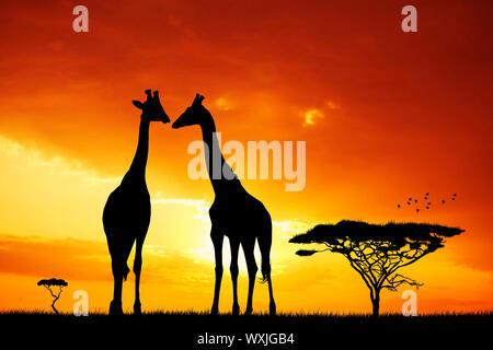 Giraffe bei Sonnenuntergang - Stockfoto