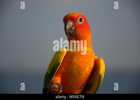 Bunten tropischen Vogel Papagei - Stockfoto
