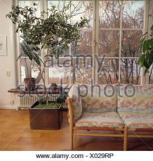 Gemusterte kissen auf blasse holz sofa im wohnzimmer mit gro er baum im topf vor gro e fenster - Sofa vor fenster ...