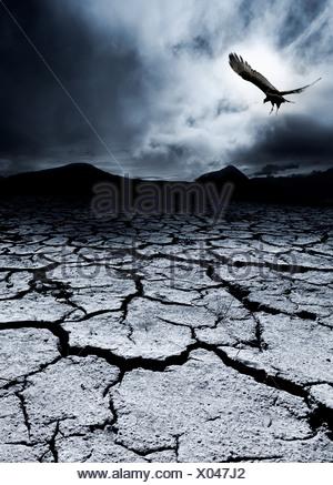 Ein Vogel fliegt über eine öde Landschaft - Stockfoto