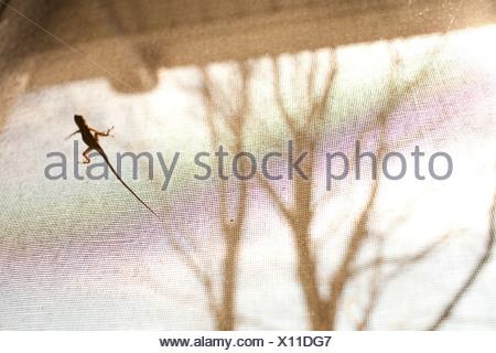 Eidechse auf Fenster-Bildschirm