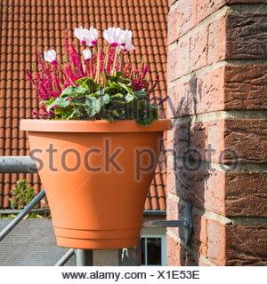Pflanzen Topf Auf Dem Balkongelander Stockfoto Bild 103536429 Alamy