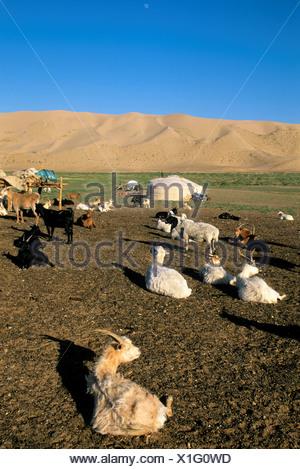 Mongolei, in der Nähe von Dalanzadgad, Gobi Wüste bei Khongoryn Els (Sanddünen), Ger (Jurte), Ziegen und Schafe - Stockfoto