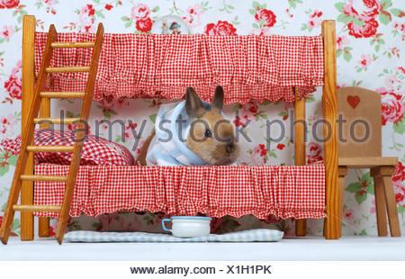 Etagenbett Für Puppenhaus : Junge kaninchen im puppenhaus stockfoto bild alamy