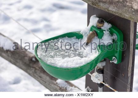 Tränke auf einer Weide, Deutschland, Nordrhein-Westfalen Stockfoto ...