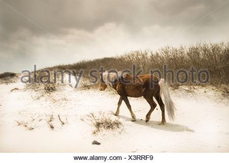Ein Pony auf einem sandigen Strand - Stockfoto