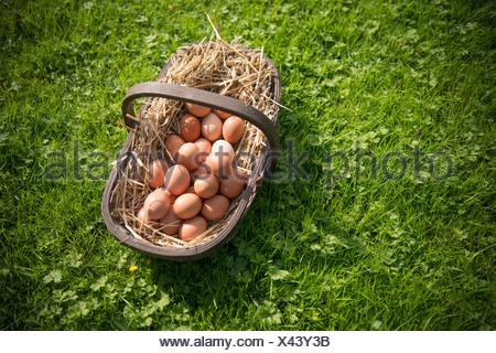 Korb mit frischen Eiern in Rasen - Stockfoto