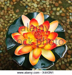 Erhöhte Ansicht einer Lotusblüte, Tirupati, Andhra Pradesh, Indien - Stockfoto