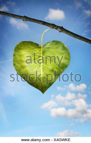 einzelnes Blatt in der Form eines Herzens - Stockfoto