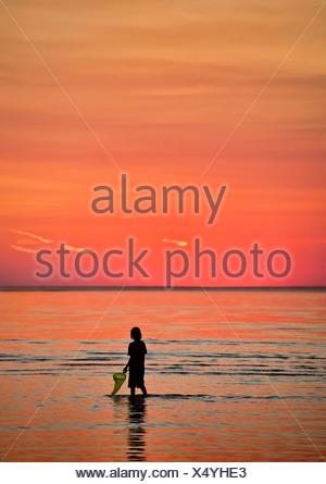 Junge erforscht die seichten Gewässer mit einem Fischernetz. Cape Cod, MA, Massachusetts - Stockfoto