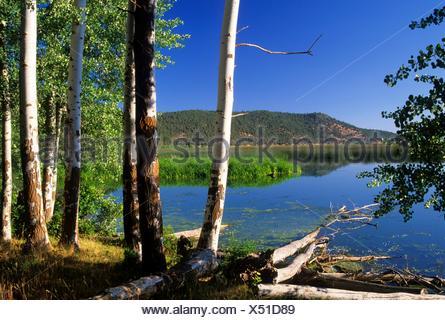 Aspen auf Shoalwater Bay Marsh, Klamath Wildlife Area, Oregon. - Stockfoto