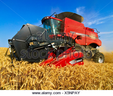 Landwirtschaft - Nahaufnahme von Case IH Mähdrescher beim Ernten von Weizen in der Palouse Region / in der Nähe von Pullman, Washington, USA. - Stockfoto