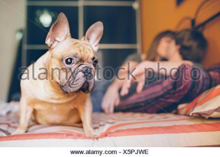 Französische Bulldogge sitzend auf dem Bett zu Hause und junges Paar küssen im Hintergrund - Stockfoto