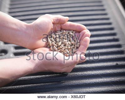 Hände halten Haufen Hackschnitzel Stockfoto