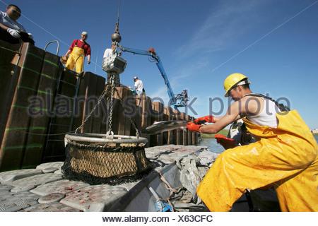 fba2e489d057 ... Westküste von Nordamerika · USA, Alaska, Kuskokwim Bay, Yup ik Arbeiter  nicht entladen und wiegen eine