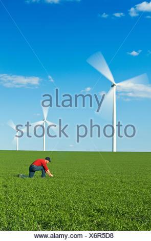 ein Mann Pfadfinder einen frühen Frühling Weizen Wachstumsfeld für Unkraut Krankheit mit Windkraftanlagen im Hintergrund Tiger Hügel, Manitoba - Stockfoto