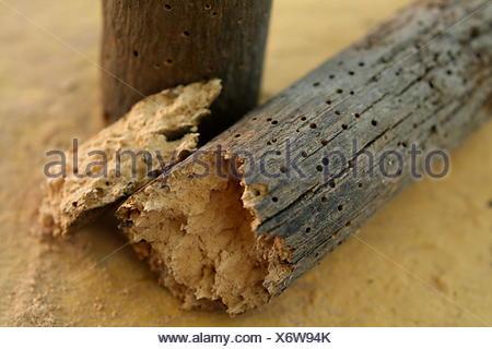 Eine Sprode Stuck Holz Zerfallen Von Holzwurm Stockfoto Bild