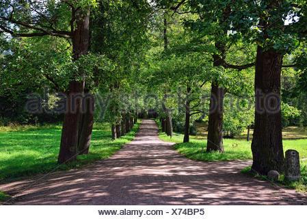Sonnigen Gasse In Pawlowsk Garten.   Stockfoto