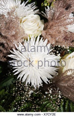 Blumenarrangement von weißen Chrysanthemen und Rosen Stockfoto, Bild ...