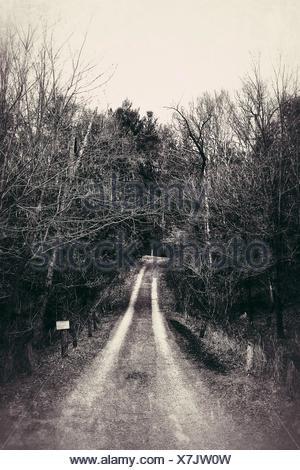 Weg inmitten von Bäumen im Wald