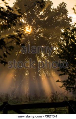 Baum in Morgensonne mit crepuscular Rays, Deutschland, Schleswig-Holsten, Luetjensee - Stockfoto