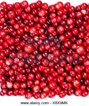 frische rote reife preiselbeeren hintergrund der ansicht von oben stockfoto bild 169624999 alamy. Black Bedroom Furniture Sets. Home Design Ideas