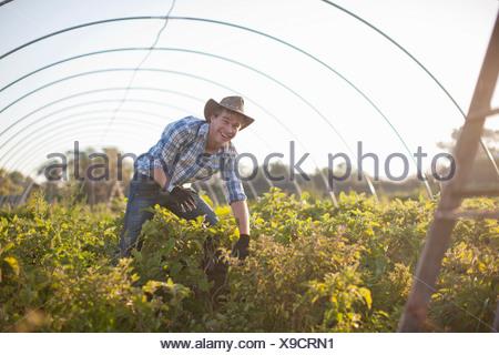 Junger Mann arbeitet in Gemüse Gewächshaus - Stockfoto