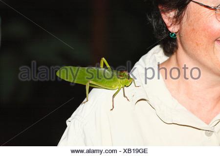 Costa Rica, große Heuschrecke auf Frau Schulter - Stockfoto