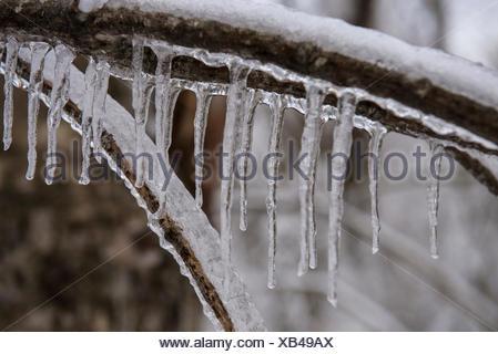 Ein Team von Forschern der Replikation ein Eissturm im Winter in den White Mountains von New Hampshire. Das Team ist die Untersuchung der Auswirkungen von Eis auf Boden, Bäume, Vögel und Insekten. - Stockfoto