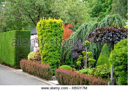 eiben englische eibe taxus baccata baum im park stockfoto bild 17468977 alamy. Black Bedroom Furniture Sets. Home Design Ideas