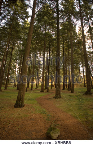 Weg durch die Bäume im Wald