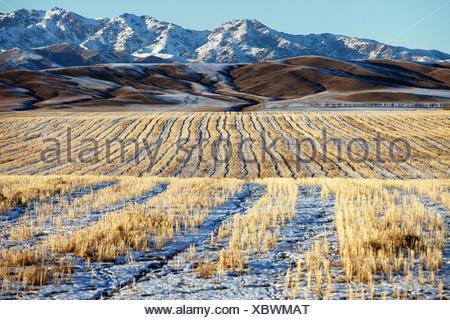 Erster Schnee auf den Feldern - Stockfoto