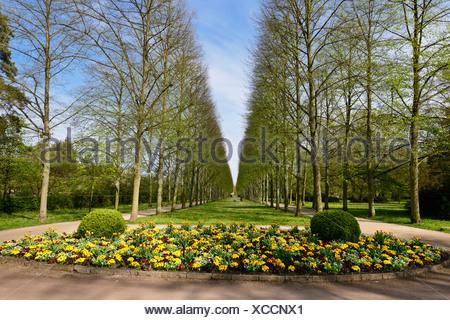 Allee von Linden, Blumenbeet, Tulpen, Park Franzoesischer Garten, französischer Garten, Celle, Niedersachsen - Stockfoto