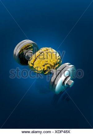 Menschliche Gehirn zwischen Gewichte auf Hantel, Abbildung. - Stockfoto
