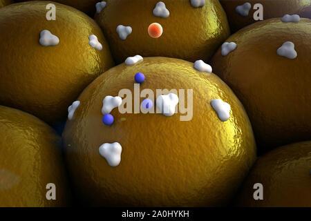 La proteína en las células grasas, receptores y la vena en la superficie de las células,