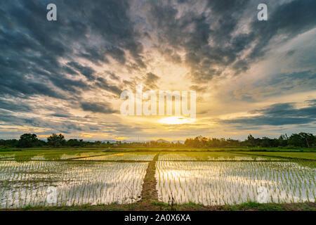 Natural del paisaje hermoso campo y nubes de tormenta y campo verde de fondo agrícola