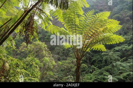 Selva profunda valle con vegetación silvestre y salvaje. Todas las tonalidades de verdes en el bosque tropical. Corona de palmeras que sobresale por encima de otros palm tree