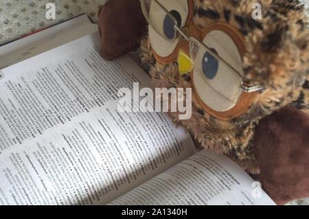 Owl con gafas de juguete en la lectura de un diccionario.