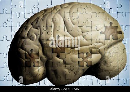 Cerebro Humano y rompecabezas con piezas faltantes - Alzheimer