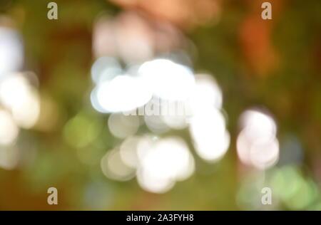 Difuminando la luz a través de la planta y la textura de fondo