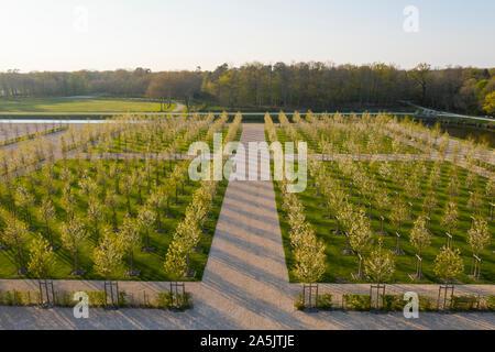 Francia, Loir et Cher, Valle del Loira catalogado como Patrimonio de la Humanidad por la UNESCO, Chambord, el castillo real, los jardines a la francesa, la plantación de flor doble wild ch