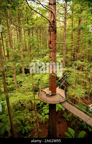 Pasarela de plataforma de madera suspendida en lo alto de los árboles en el bosque Whakarewarewa Redwood en Rotorua.