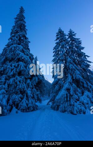 Hermoso paisaje de montaña de invierno. Paisaje invernal congelado en la montaña de los Cárpatos. Estado de ánimo de Navidad de invierno. Nevados de pinos en un paisaje de invierno
