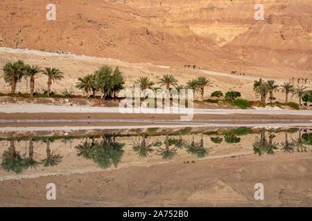 Reflejo de montañas y palmeras en el agua del mar muerto al amanecer. Israel