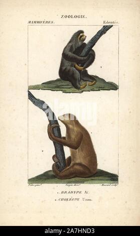 """Aguarï perezoso de tres dedos, Bradypus torquatus (vulnerable), y de dos Linnaeus vetado perezoso, Choloepus didactylus. Copperplate Handcolored stipple grabado de Frederic Cuvier's 'Dictionary de Ciencias Naturales: mamíferos"""", París, Francia, 1816. Ilustración por J. G. Pretre, grabado por Massard, dirigida por Pierre Jean-Francois Turpin, y publicado por F.G. Levrault. Jean Gabriel Pretre (17801845) fue pintor de historia natural en el zoológico de la Emperatriz Josefina y más tarde se convirtió en el artista al Museo de Historia Natural. Turpin (1775-1840) está considerado como uno de los mejores ilustradores de los botánico francés"""
