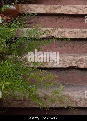 Escalera de piedra rosa y plantas suculentas